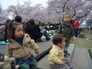 東工大 桜 お花見